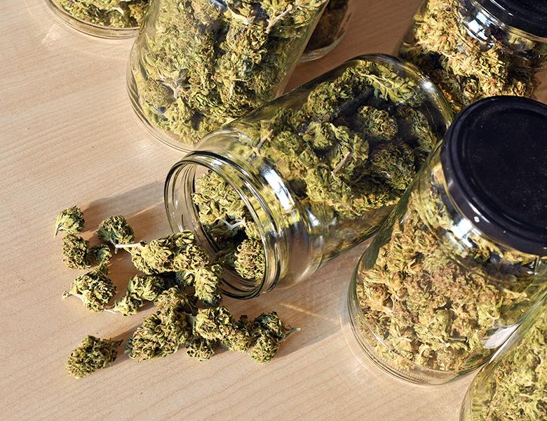MPP_Web_Banners_Cannabis